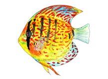 Tropisk fiskdiskus för flygillustration för näbb dekorativ bild dess paper stycksvalavattenfärg Royaltyfri Fotografi