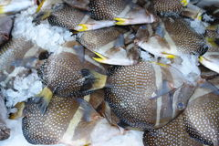 tropisk fiskmat Royaltyfri Foto