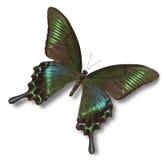 tropisk fjäril Royaltyfria Bilder