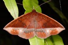 Tropisk fjäril från rainforest Arkivfoto