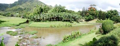 tropisk flod Arkivbild