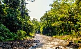 tropisk flod Fotografering för Bildbyråer