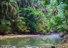 Tropisk flod i djungelskoggrönska Sommarlopplandskap med palmbladet över lugna flodvatten Arkivfoton
