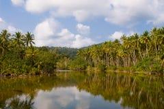 Tropisk flod med palmträd Royaltyfria Bilder