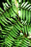 Tropisk flora Arkivbilder