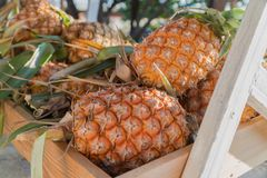 Tropisk frukt för ananas Arkivfoton
