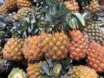 Tropisk frukt för ananas Fotografering för Bildbyråer