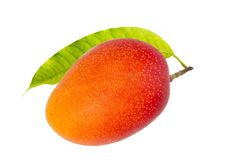 Tropisk frukt för japansk röd mango arkivfoton