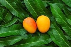 Tropisk frukt för mogen mango på grön bladbakgrund royaltyfria foton