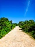 tropisk gata Arkivbilder