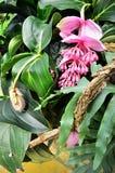 Tropisk gräns - rosa färgblomma och lövverk Arkivfoto