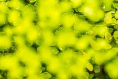 tropisk gräsplan lämnar bakgrund Royaltyfri Bild