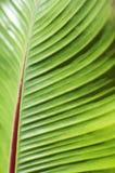 tropisk grön leaf för detalj Arkivbild