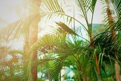 Tropisk grön palmträdbakgrund Ljus effekt för sol och solig bokeh Sommar, ferie och loppbegrepp med kopian arkivbild
