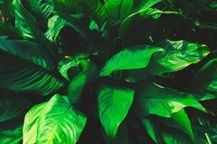 Tropisk grön sommarabstrakt begreppbakgrund Arkivfoton