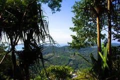 Tropisk grönska i Thailand Härligt exotiskt landskap som förbiser den gröna djungeln och lövverket av träd royaltyfri foto