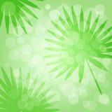 Tropisk gr?n bakgrund med palmblad vektor vektor illustrationer