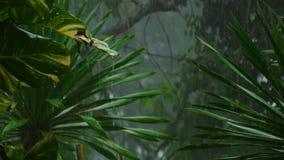Tropisk hällregn utomhus lager videofilmer