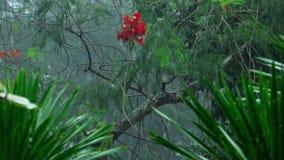 Tropisk hällregn utomhus stock video