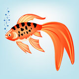 tropisk härlig fisk Fotografering för Bildbyråer