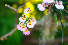Tropisk härlig orkidé Royaltyfria Bilder