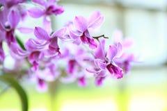 Tropisk härlig orkidé Arkivbilder