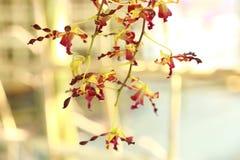Tropisk härlig orkidé Arkivfoton