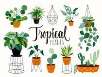 Tropisk hand drog husväxter med handbokstäver Arkivbild