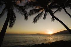 tropisk hawaiansk solnedgång arkivbild