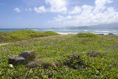 Tropisk Hawaii strand med pohuehueblommor arkivbilder