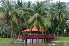 tropisk himmel Royaltyfri Fotografi