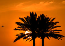 Tropisk himmel för palmträdsolnedgångapelsin Royaltyfria Foton