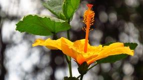tropisk härlig blomma Arkivfoto