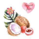 Tropisk illustration för vattenfärg med kokosnöten och palmbladet på vit bakgrund royaltyfri illustrationer