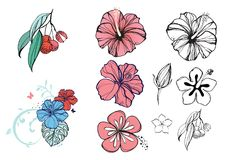 Tropisk illustration med blommor och bär, hibiskus, litchiplommon stock illustrationer