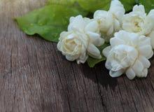 Tropisk jasminblomma på trä Jasminblommor och sidor på br royaltyfri fotografi