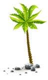 Tropisk kokosnötpalmträd med gröna sidor Arkivfoto