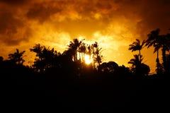 Tropisk kontur för solnedgångforntid av träd Arkivbild