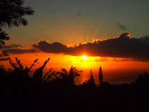 Tropisk kontur för solnedgångforntid av träd till och med molnen över Arkivbild