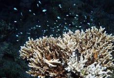tropisk korall royaltyfria bilder