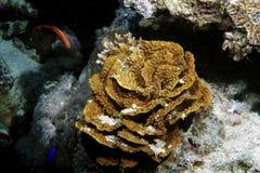 tropisk korall Arkivfoto