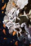 tropisk korall Fotografering för Bildbyråer