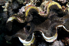 tropisk korall Royaltyfri Foto