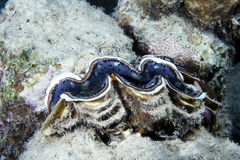 tropisk korall Arkivfoton