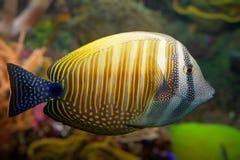 tropisk korallfisk Royaltyfri Fotografi