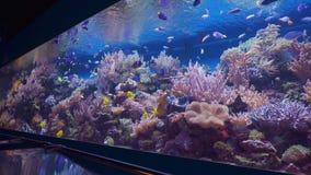 tropisk korallfiskrev lager videofilmer