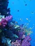 tropisk korallfiskrev Royaltyfri Foto