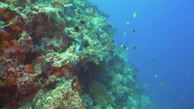 tropisk korallfiskrev Bali Indonesien arkivfilmer