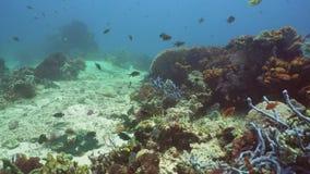 tropisk korallfiskrev Bali Indonesien lager videofilmer