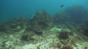 tropisk korallfiskrev Filippinerna Mindoro arkivfilmer